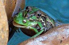 Frognat_450x300749133